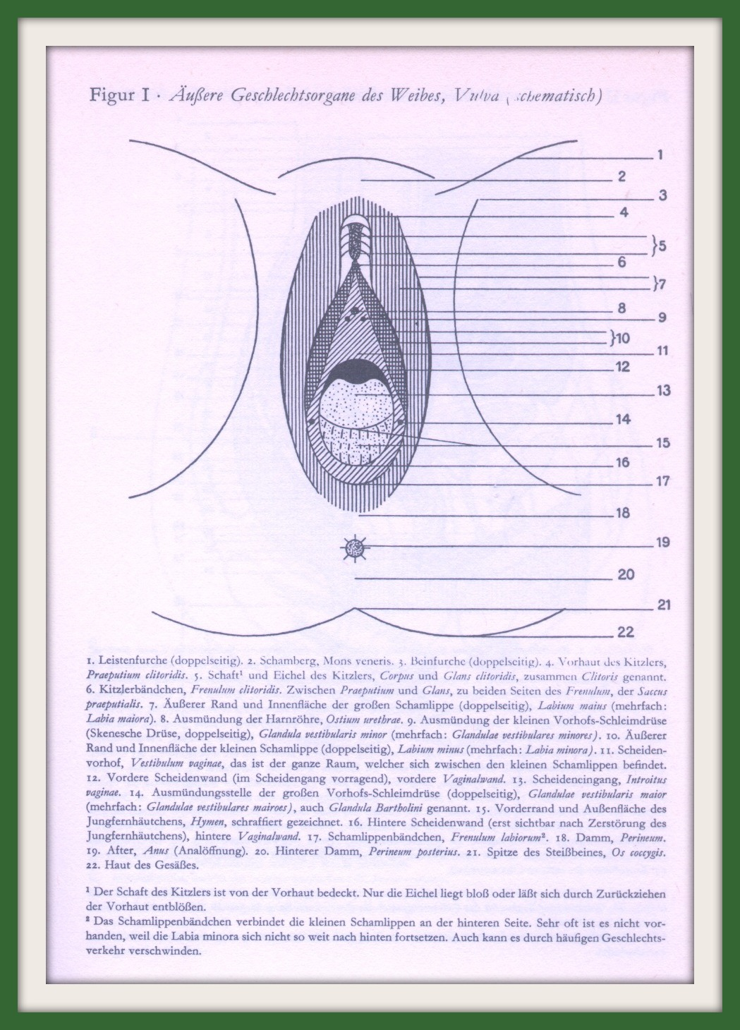 Besondere Geschlechtsphysiologie und Anatomie